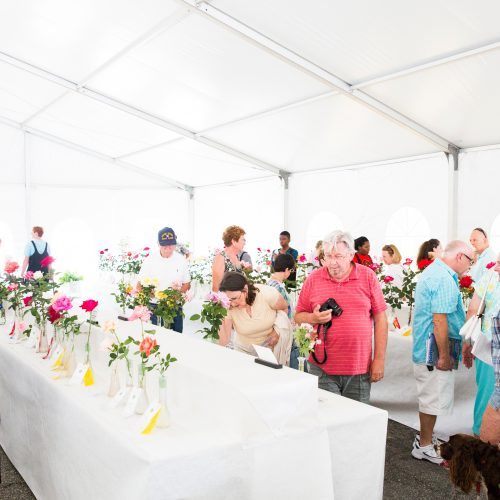 Rose Show tent